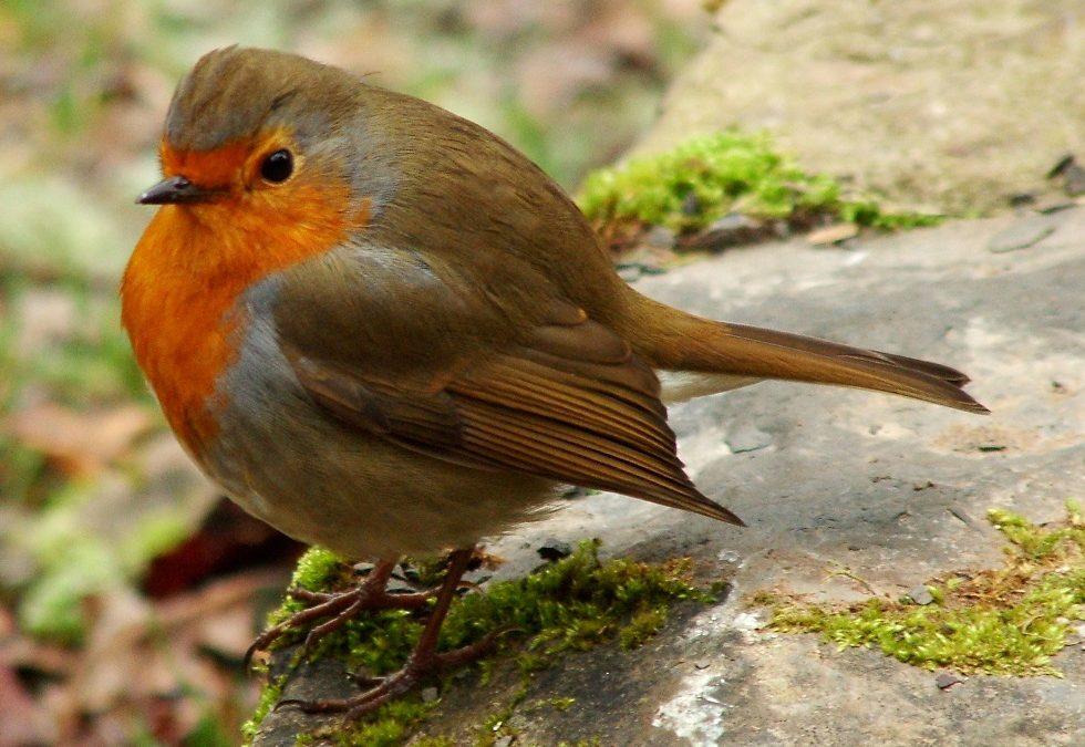 Christopher and the Christmas Robin